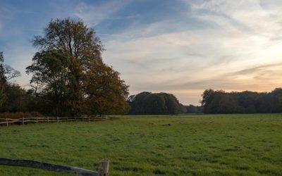 De Horsten: wandelen over het Koninklijk Landgoed