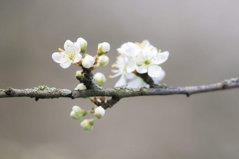 wandelen fotograferen bloemen