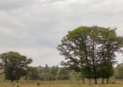 NP Sallandse Heuvelrug