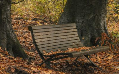 Herfst op de Veluwezoom