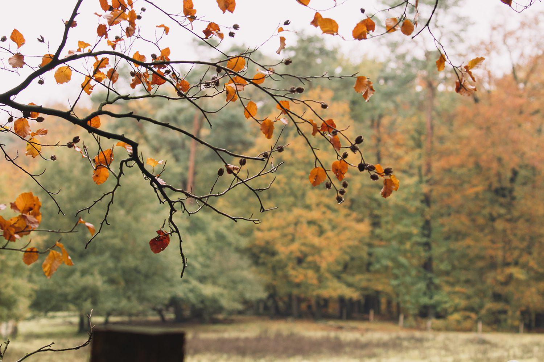 Herfst veluwezoom