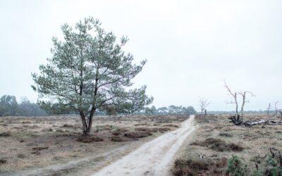 Het Deelerwoud: Een crossbill wandeling