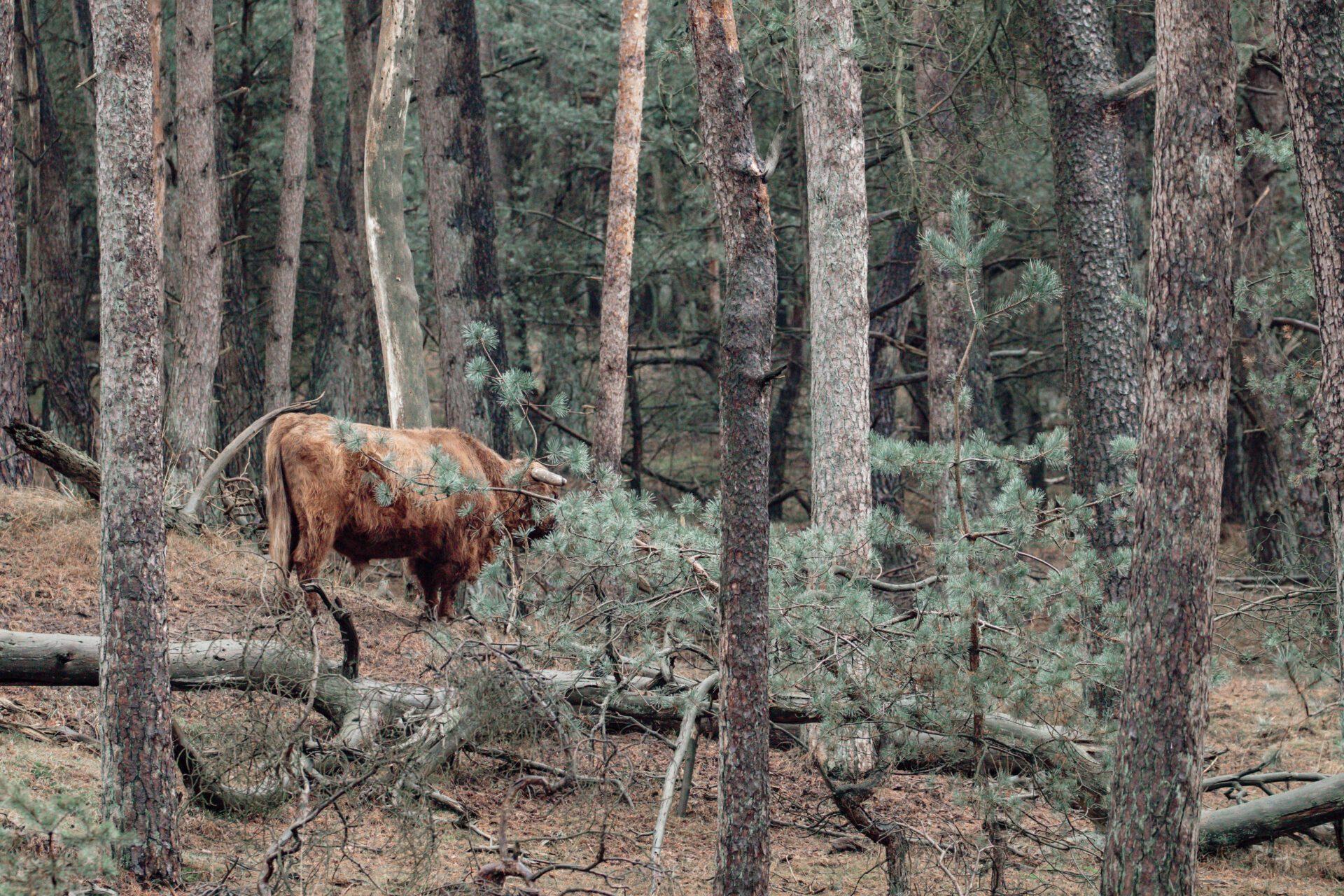 Wild spotten