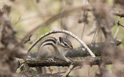 Wandelen door de Oude Warande met eekhoorntjes