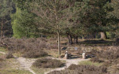 Een wandeling op Heidestein; afwisselend en verrassend