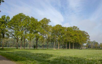 Wandelen Landgoed De Utrecht: afwisselend en leuk