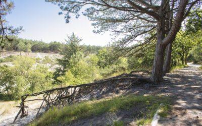 Wandelen in Schoorl; bos, duin, hei en zee