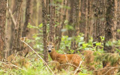 Vierhouterbos Veluwe; een wilde wandeling