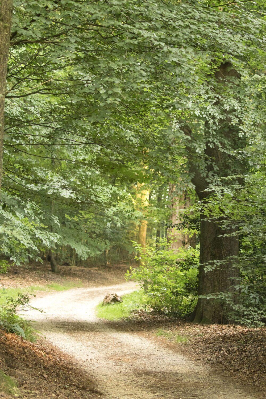 wandelroute Hoog Buurlo