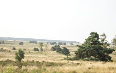 7 mooiste wandelroutes op de Veluwe
