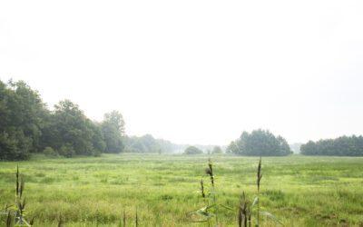 Logtsevelden Kampina: een wandelroute vol afwisseling