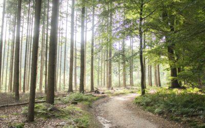 IVN route over Landgoed Prattenburg