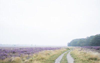 Een wandelroute over de paarse Ginkelse Heide