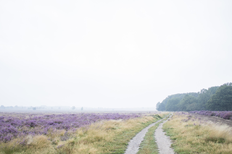 wandelen Ginkelse Heide