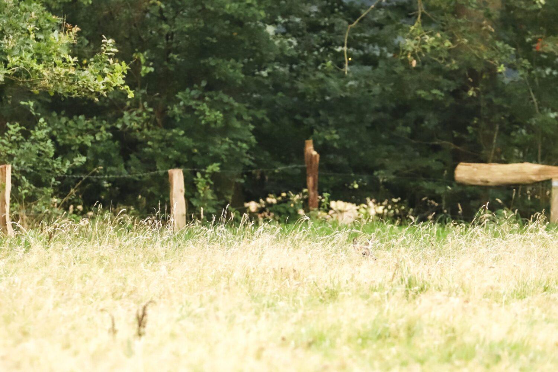 wandelroute Springendal
